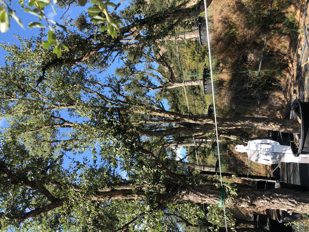Quercus suber cont. 450l-1  P