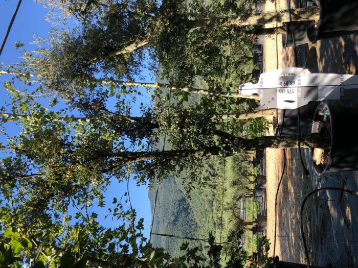 Quercus suber cont. 350l-0 P